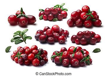 senderos, arándanos, lingonberries