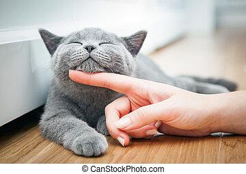 sendo, mão., mulher, gostar, gatinho, acariciado, feliz