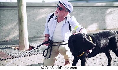 A senior blind man with guide dog outdoors in city, resting. Slow motion.