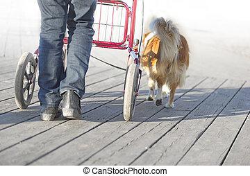 senior citizen with walking frame