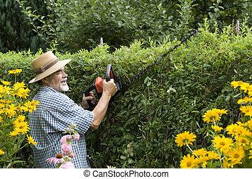 senior clipping a hedge in the garden