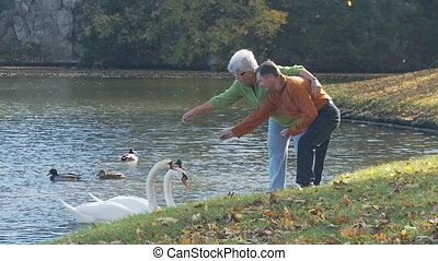 senior couple feeding swans on lake in autumn