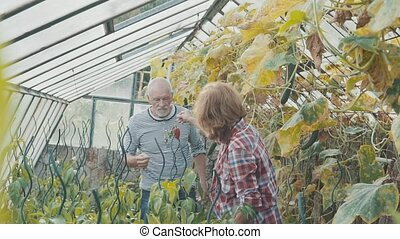 Senior couple gardening in the backyard garden. - Happy...