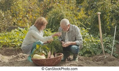Senior couple gardening in the backyard garden. - Happy...