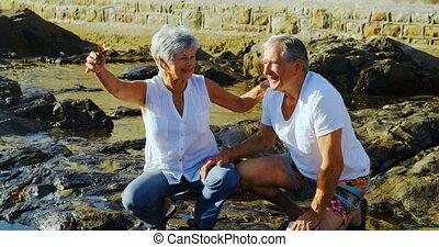 Senior couple holding a bird near sea 4k - Senior couple...