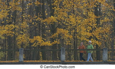 senior couple in decidous forest - senior couple in...