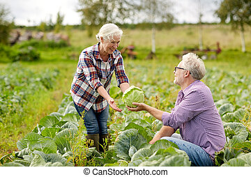 senior couple picking cabbage on farm - farming, gardening,...