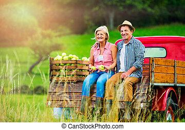 Senior couple sitting in pickup truck, apple harvest
