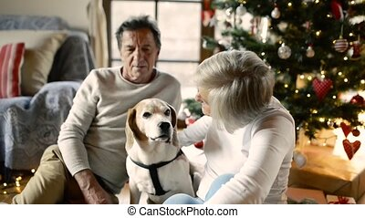 Senior couple with dog in front of Christmas tree with presents.
