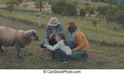Senior couple with grandaughter feeding a sheep on the farm.