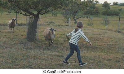 Senior couple with grandaughter feeding sheep on the farm.