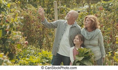 Senior couple with grandaughter gardening in the backyard garden