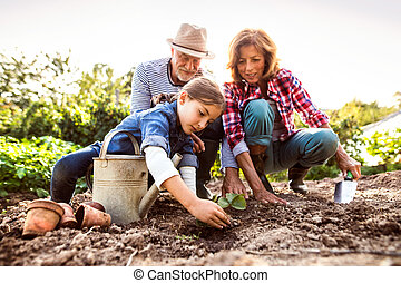 Senior couple with grandaughter gardening in the backyard...