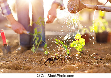 Senior couple working in garden - Senior couple watering...