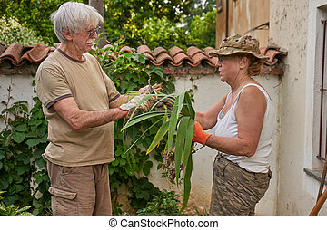 Senior couple working in the garden together helping each other