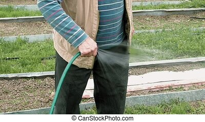 Senior elderly man waters a bed vegetable garden