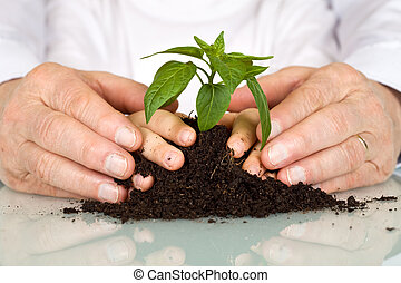 senior, en, geitjes, handen, pampering, een, nieuw, plant
