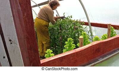 senior farmer greenhouse