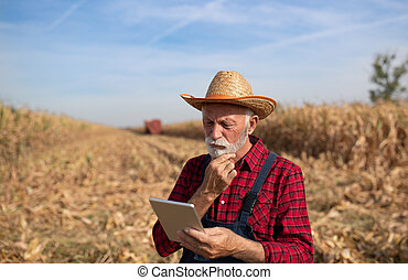Senior farmer with tablet in corn field during harvest