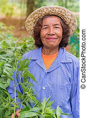 Senior farmer woman in the vegetable garden