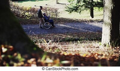 A senior father and his son in wheelchair on a walk in nature, talking. Slow motion.