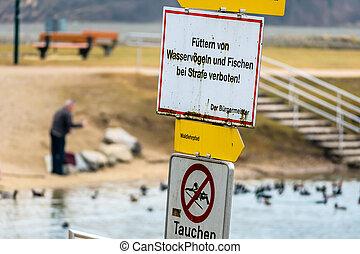 senior feeding ducks