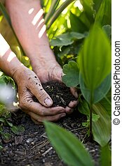Senior female hands giving fertilizers to the plants