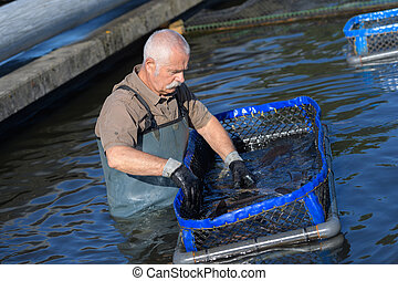 senior fish farmer at work
