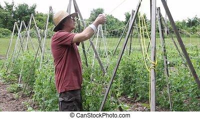 Senior gentleman working in the garden