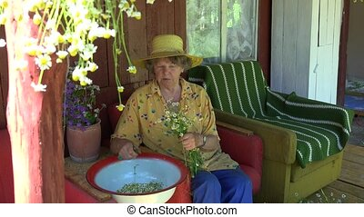 Senior grandmother woman with hat pick chamomile flower herbs. 4K
