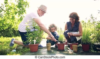 Senior grandparents and granddaughter gardening in the ...