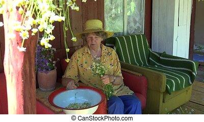 senior, grootmoeder, vrouw, met, hoedje, plukken, chamomile, bloem, herbs., 4k