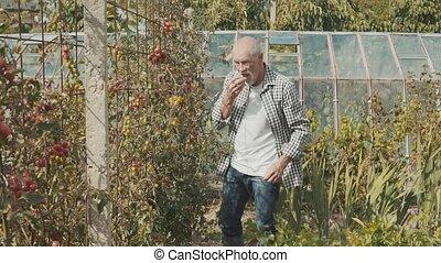 Senior man gardening in the backyard garden. - Handsome...
