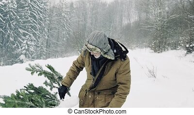 Senior man getting a Christmas tree in forest, pulling it....