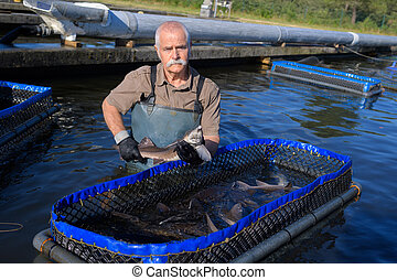 Senior man in water with contained enclosure of fish