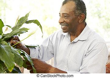 Senior Man Looking After Houseplant
