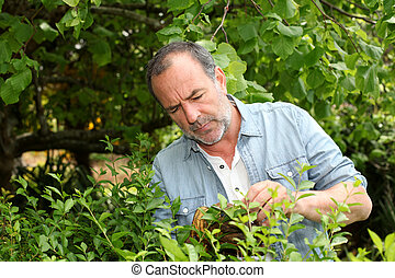Senior man looking at plants in private garden