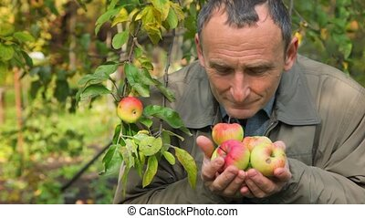 senior man reaching out hands with apples to camera in park...