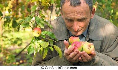 senior man smelling apples in park - senior man smelling...