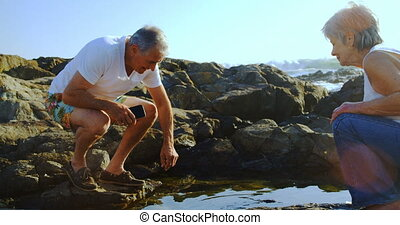 Senior man taking out sea shell near sea side 4k - Senior...