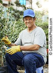 Senior man trimming plants