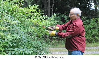 senior man trimming shears bush