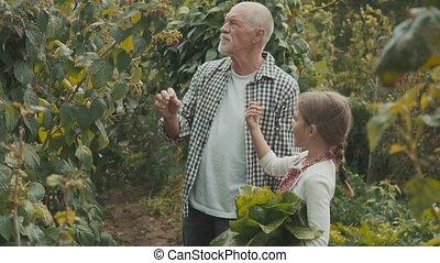 Senior man with grandaughter gardening in the backyard garden