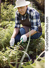 Senior man working in the field