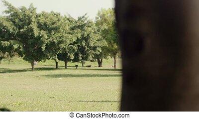 Senior people jogging in park