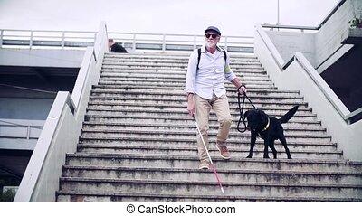 senior, pieszy, na dół, przewodnik, ślepy, city., człowiek, pies, schody