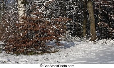senior running in the snow