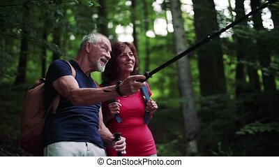 Senior tourist couple with backpacks on a walk in forest in nature, talking.