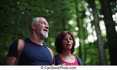 Senior tourist couple with backpacks standing in forest in nature.