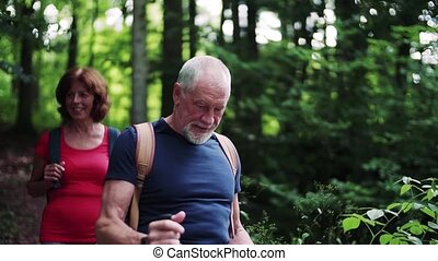 Senior tourist couple with backpacks walking in forest in nature.